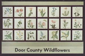 Door County Wildflowers Postcard