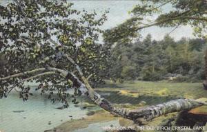 The Old Birch at Crystal Lake Near Harrison, Maine - DB