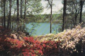 Washington Suburban Sanitary Commission Brighton Dam Azalea Garden