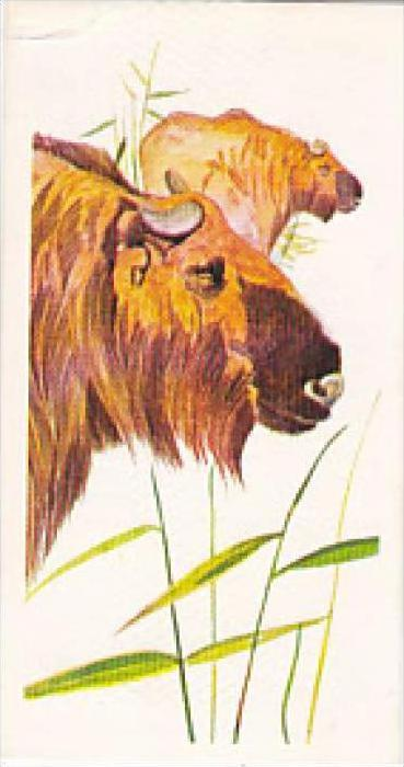 Brooke Bond Vintage Trade Card Vanishing Wildlife 1978 No 13 Golden Takin