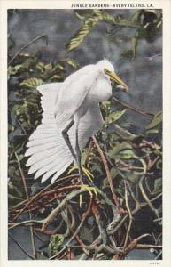 Scene From Jungle Gardens New Iberia Louisiana Curteich
