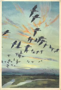 Postcard the Dumbles at daybreak painting from a picture by Peter Scott