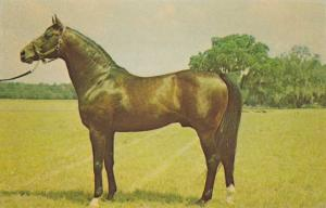 Florida Stallion - Rough'N Tumble - Ocala Horse Stud Farm