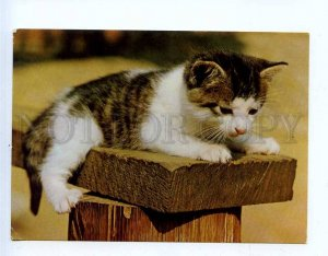 284830 EAST GERMANY GDR CATS old photo postcard