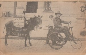NEW YORK CITY , 1916 ; City Hall ; Donkey & Man in wheel chair ; To San Diego