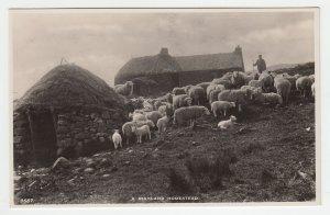 P2195 vintage RPPC a highland homestead sheep unused