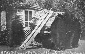 Tree Trunk & Dance Hall, Big Tree Grove Calaveras Co, CA c1910s Vintage Postcard