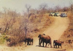 Kruger National Park South Africa Elephant Family Old Cars Olifant Postcard D23