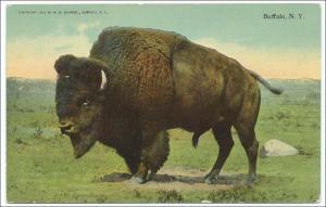 Buffalo - Buffalo NY
