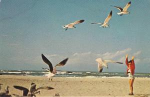 Boy & Seagulls , Myrtle Beach , South Carolina,  50-60s