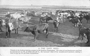 Victoria Australia Dairy Herd Cattle Cows Vintage Postcard JE229760