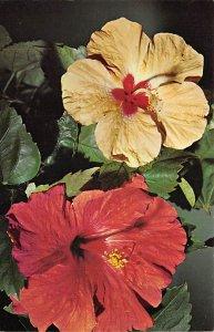 Bermuda Postcard Old Vintage Island Post Card Hibiscus Unused