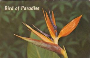 Flowers Bird Of Paradise 1967