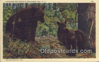 Adirondack, Mts, NY USA Bear Unused