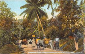 Jamaica  Kent Village    People and donkeys on Bog walk