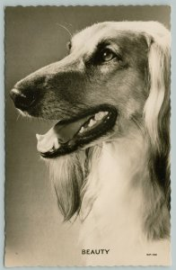 RPPC Portrait Postcard of Saluki Beauty or Afghan Hound~Closeup~Fine Photography