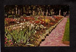 MT Washoe Park near Pioneer Cabin Anaconda Montana Postcard Flowers