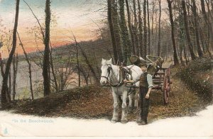 In the Beechwoods Tuck Rural Life Series PC # 1422