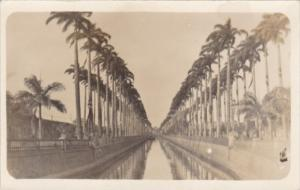Uruguay Montevideo Avenue Of Palms Real Photo