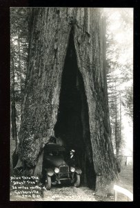 dc1683 - GARBERVILLE Ca 1930s car going through a Tree. Real Photo Postcard