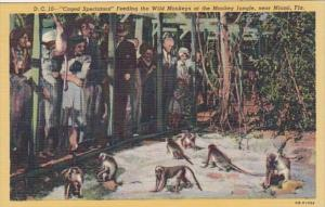 Florida Miami Caged Spectators Feeding The Monkeys At The Monkey Jungle Curteich