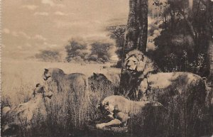 Tiger Leopard Lion Post Card African Lions New York Zoological Park, USA 1949