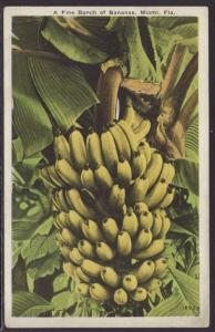 A Fine Bunch of Bananas,Miami,FL