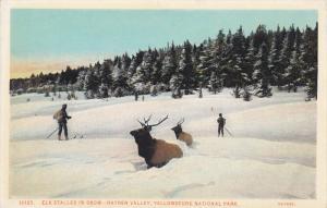YELLOWSTONE, Wyoming, 1900-1910´s; Elk Stalled In Snow, Hayden Valley, Yello...