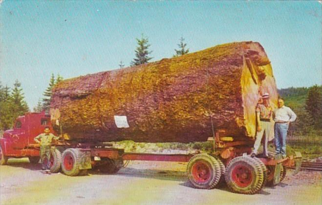 Logging Truck With Giant Fir Log Working In Oregon and Washington