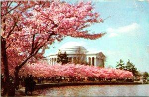 Arlington VA Jefferson Memorial Cherry Blossom Spring Postcard used (14820)