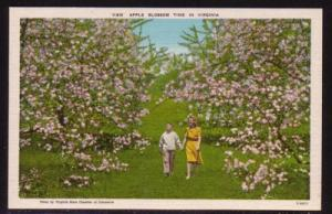 Virginia Postcard Apple Blossom Time
