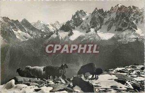 Postcard Modern LANDSCAPES ALPINE-High Mountain Sheep