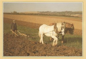 Traditional Crafts. Horses. Plpughing  Modern English PC. Continental size