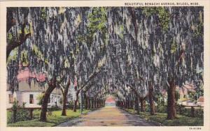 Mississippi Biloxi Beautiful Benachi Avenue