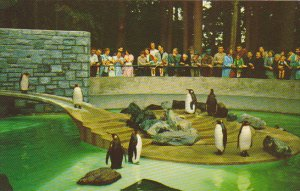 Penguins Stanley Park Vancouver British Columbia