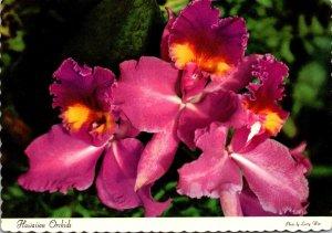 Hawaii Beautiful Hawaiian Orchids
