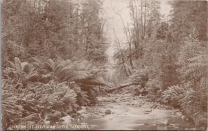 Ferns On The Geeveston River Tasmania Australia AU Unused Vintage Postcard E24