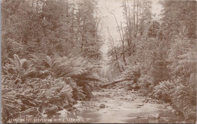 Ferns On The Geeveston River Tasmania Australia AU Unused Vintage Postcard E24