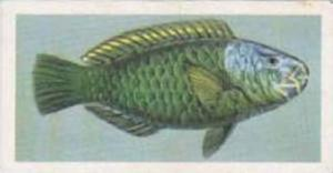 United Tobacco South Africa Vintage Trade Card African Fish 1937 No 35 Wrasse