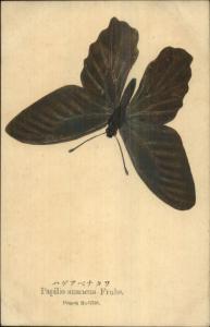 Japanese Butterfly Hand-Painted? Latin Papilio Annaeus Frubs Patent Postcard