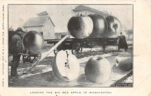 G33/ North Yakima Washington Postcard 1907 Exaggeration Apples Comic