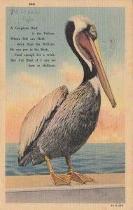 PELICAN , 1938 ; Poem