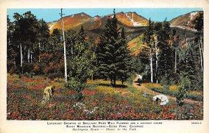 Rocky Mountain National Park Estes Park, Co, USA Burlington Train Unused