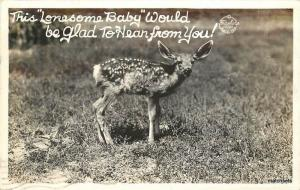 1940s Mule Deer FRASHER Real photo RPPC 4702 CALIFORNIA