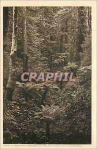 Old Postcard LASO DI COMO - VILLA CARLOTTA