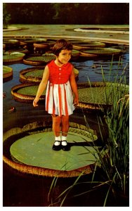 Pennyslvania  kennett Square Longwood Gardens , Child on Water Lily