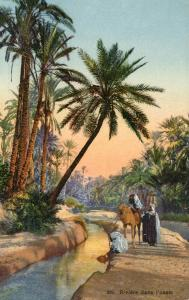 Egypt - River in the Oasis