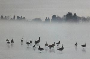 On Ice , Lost Lagoon , Stanly Park , VANCOUVER , B.C. , Canada , 1992