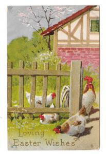 Easter Wishes Rooster Hens Fenced Yard Vintage Embossed Postcard Posted 1911