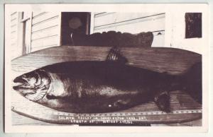 P860 1945 large salmon caught charleston lake ontario, 39'', 29 1/2 lbs